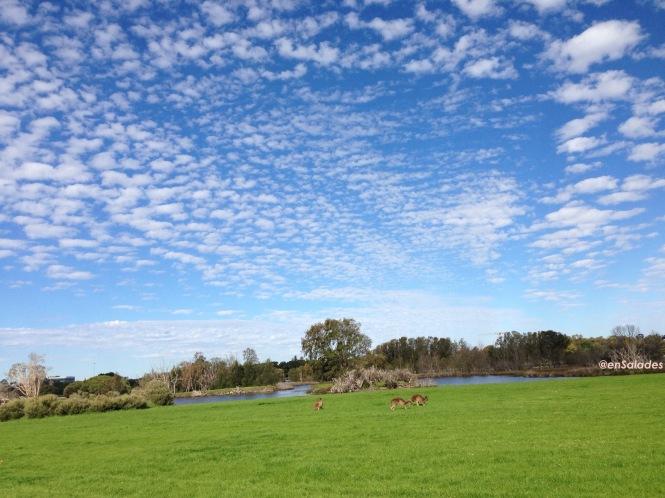 Heirisson Island Kangourou Perth