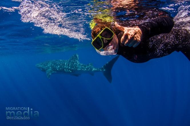 whale shark coral bay wa