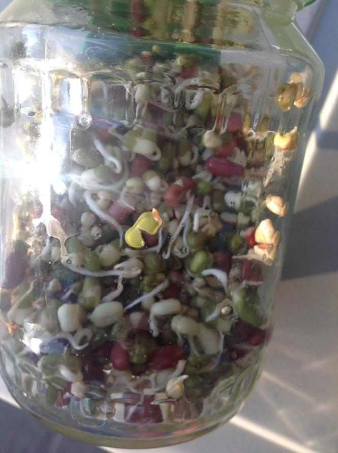 enzymes soak beans